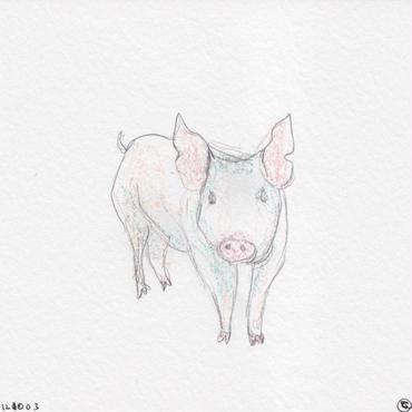 ポストカード / Satoshi Dáte