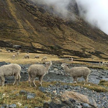 Peru - Rosaspata