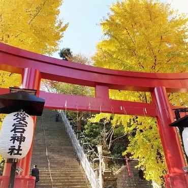 11/22(木)最強縁結びスポット 愛宕神社で恋愛成就!&レッドアフタヌーンティー