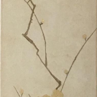 梅の木90/2