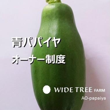 【1/4口】青パパイヤオーナー制度年間契約1/4本分  無農薬で育てお届け致します