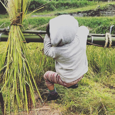 自然農法玄米 1kg