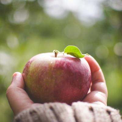美味しいリンゴだよ
