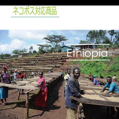 エチオピア ナノ・チャラ ウォッシュト 100g