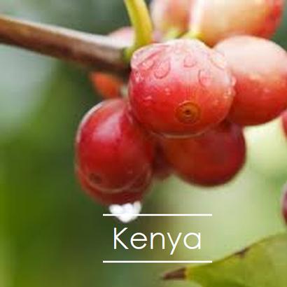 ケニア カシマファクトリー  200g