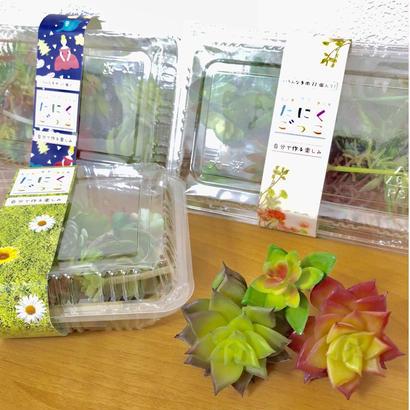 たにくごっこ~フェイク多肉植物 3パックset~¥672×3パック⇒税込卸価格