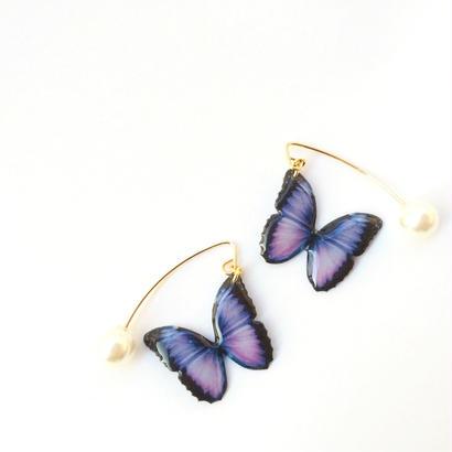 神秘の泉を舞う蝶々 【1D-VLV-1】