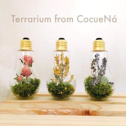電球テラリウム3種類セット