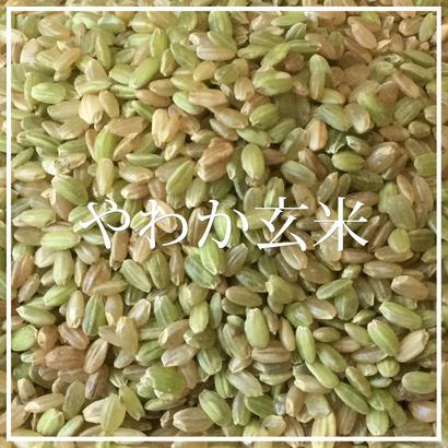 やわか玄米 1kg