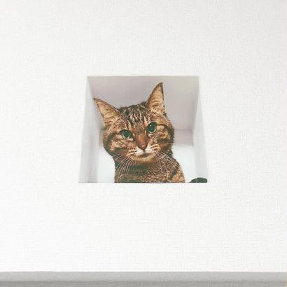 妄想マッピングステッカー/壁からネコ