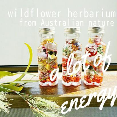 送料無料‼  ワイルドフラワーのハーバリウム  オーストラリアのエネルギッシュな花花をぎゅっと詰め込み Pokoオリジナル