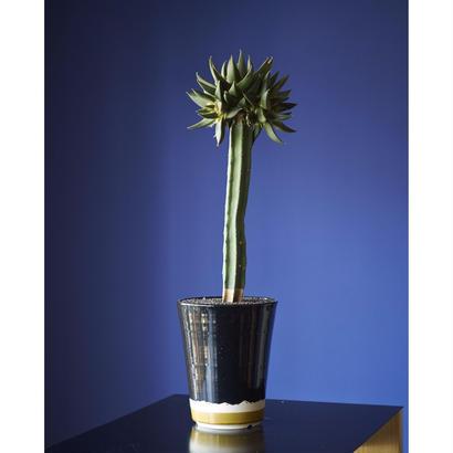 三角牡丹錦(三頭・袖接ぎ) × AMETSUCHI pot (L)