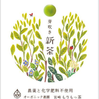 「芽吹き 新茶ミニ(15g)」フレッシュな生茶仕立て