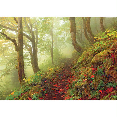 Path : Magic Forests - 29519