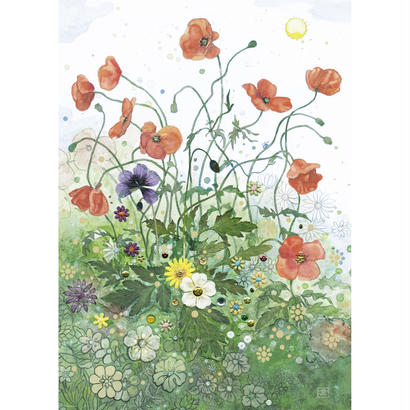 Red Poppies : Jane Crowther - 29774