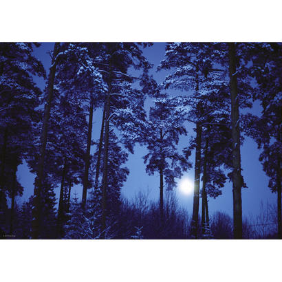 Full Moon  :  Magic Forests - 29625