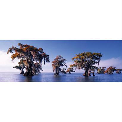 Bald Cypresses : Ed. Humboldt - 29607