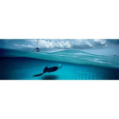 Stingray : Ed. Humboldt - 29470