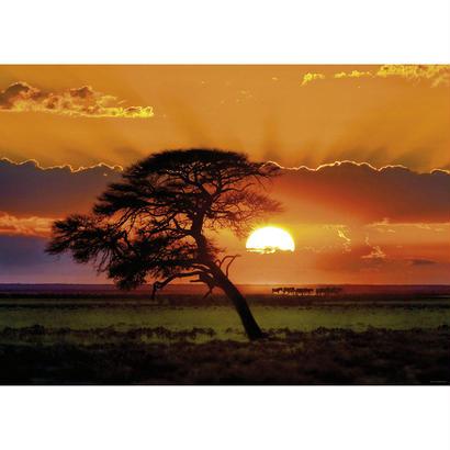 Sunny Tree  :  Sunlight - 29689