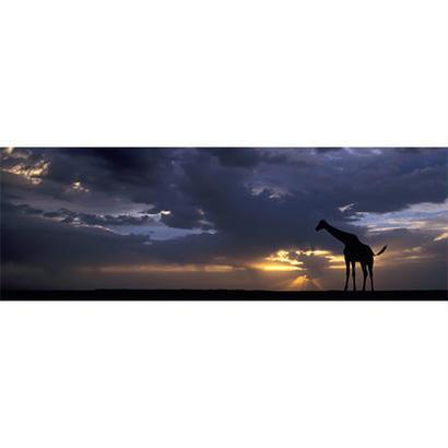 Sunset : Ed. Humboldt - 29471