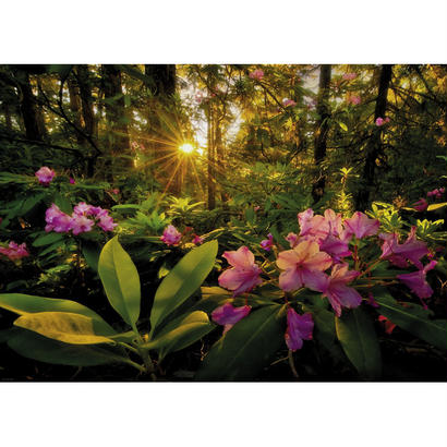 Rhododendron  :  Magic Forests - 29662