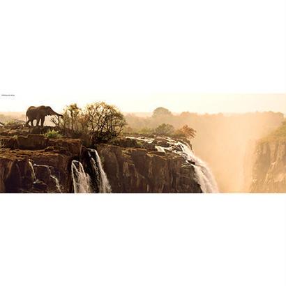 Elephant : Ed. Humboldt - 29287