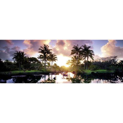 Palm Trees  :  Ed. Humboldt - 29676