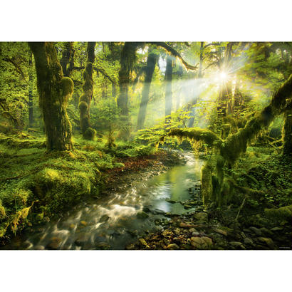 Spirit Garden  :  Magic Forests - 29771