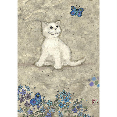 White Kitty : Jane Crowther - 29626
