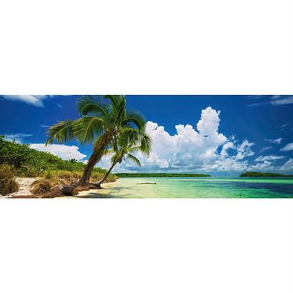 29860  Ed. Humboldt : Paradise Palms