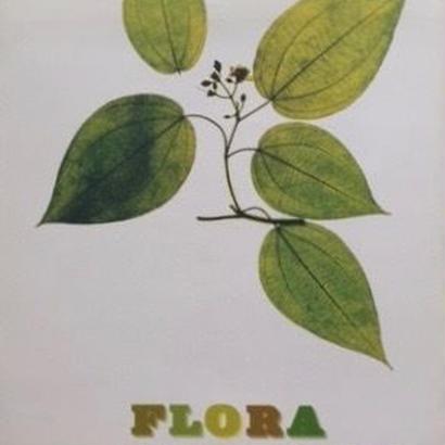 Flora : Nick Knight