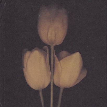 Tulipa / L.Blok & Jasper Wiedeman