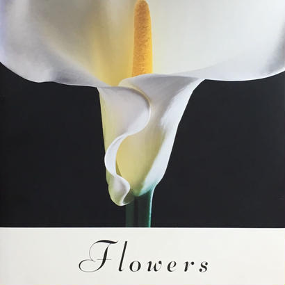 Flowers  / Robert Mapplethorpe