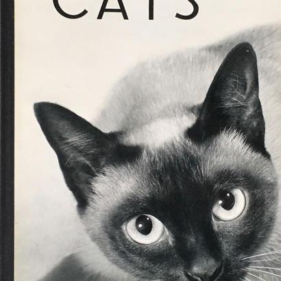 CATS / HANS REICH