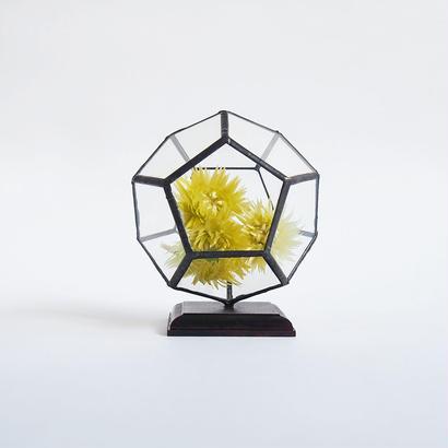 mini terrarium/regular dodecahedron/black