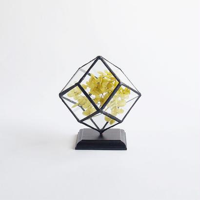 mini terrarium/rhombic dodecahedron/black