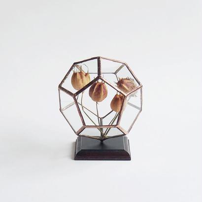 mini terrarium/regular dodecahedron/antique
