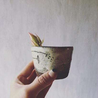清水しおり 小鉢(A)