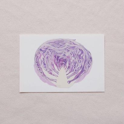 白井裕子 ポストカード 紫キャベツ