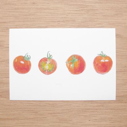 白井裕子  ポストカード  ミニトマト