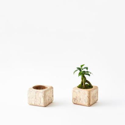 [chii]植物の美しさを引き立てるプランター 3号