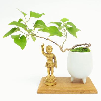 【マイクロ盆栽&仏像(台座付き)】アオツズラフジ