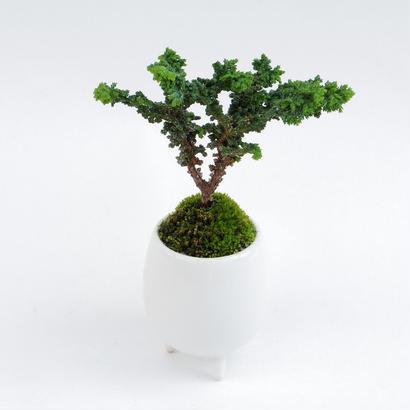 【マイクロ盆栽】セキカヒノキ(石化檜)