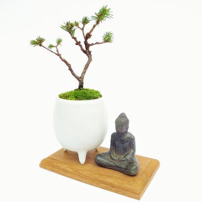 【マイクロ盆栽&仏像(台座付き)】エゾマツ