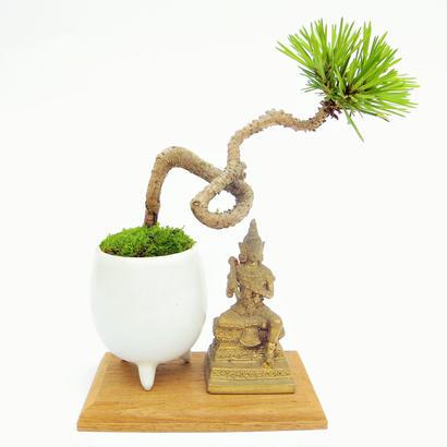 【マイクロ盆栽&仏像(台座付き)】クロマツ