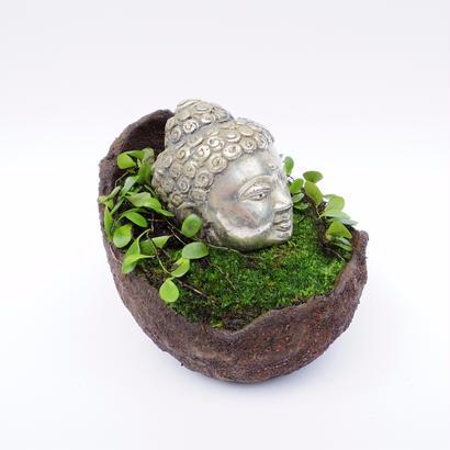 【仏像盆栽】苔