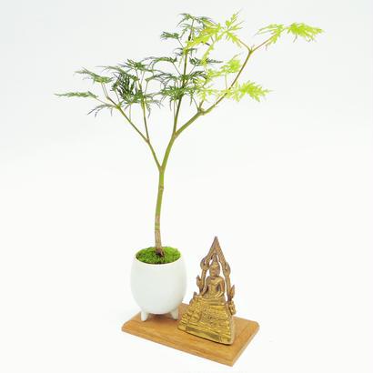 【マイクロ盆栽&仏像(台座付き)】モミジ