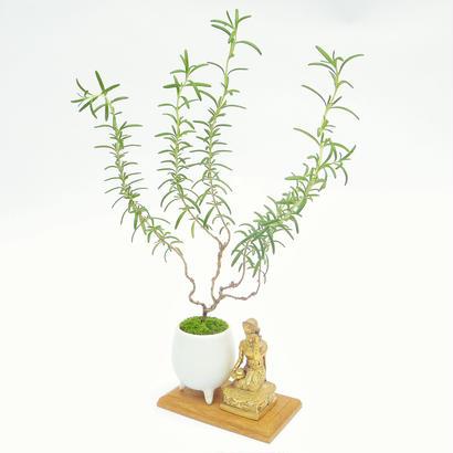 【マイクロ盆栽&仏像(台座付き)】ローズマリー