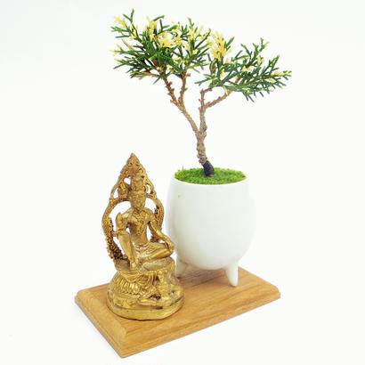 【マイクロ盆栽&仏像(台座付き)】斑入りシンパク