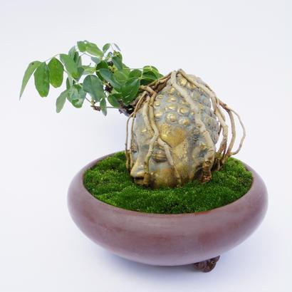 【仏像盆栽】アケビ